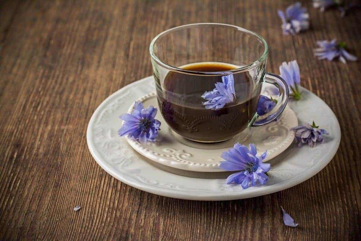 قهوة جذور الهندباء البرية - قهوة الشيكوريا - Chicory Coffee