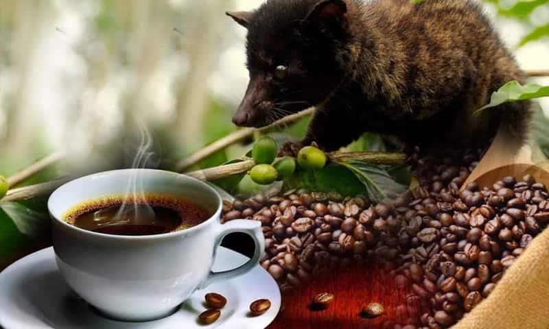 قهوة كوبي لوك