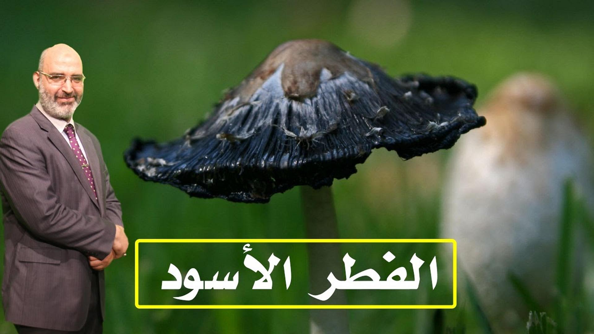 تعرف على الفطر الأسود مع الدكتور أمير صالح